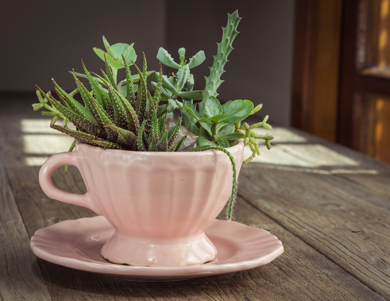 Simple And Easy DIY Vintage Teacup Planter For Your Indoor Garden