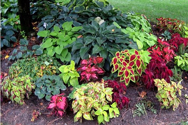 Ten Top Tips For Small Shady Urban Gardens: Smart Design Tips And Ideas For A