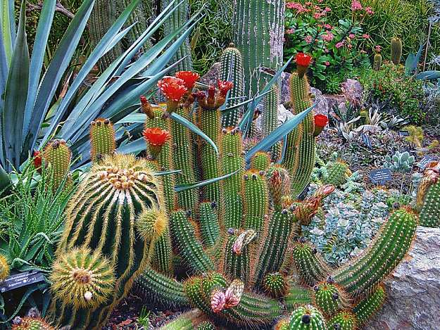 Drought-Tolerant Flowers | Flower Gardening For Beginners: A Guide To Growing Your Dream Garden