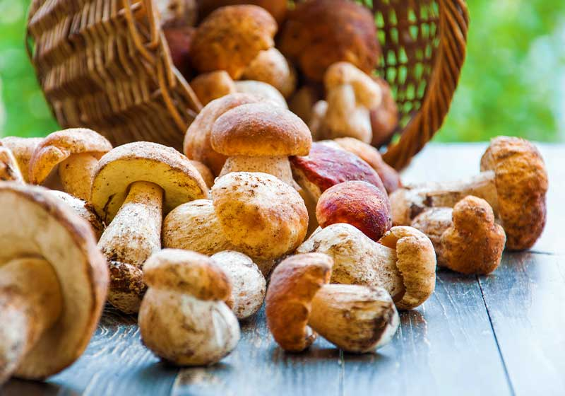Autumn Cep Mushrooms | Fall Garden Crops | Fruits And Veggies Perfect To Grow This Season | Fall Season Garden Ideas