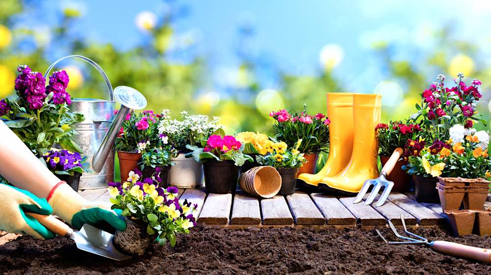 Flowers and Gardening Tools | Starting A Garden This Spring | Easy Gardening Tips And Tricks | Featured
