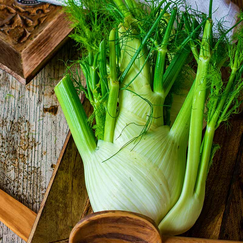 fresh and uncooked fennel on a rustic table | Fall Garden Crops | Fruits And Veggies Perfect To Grow This Season | Fall Season Garden Ideas