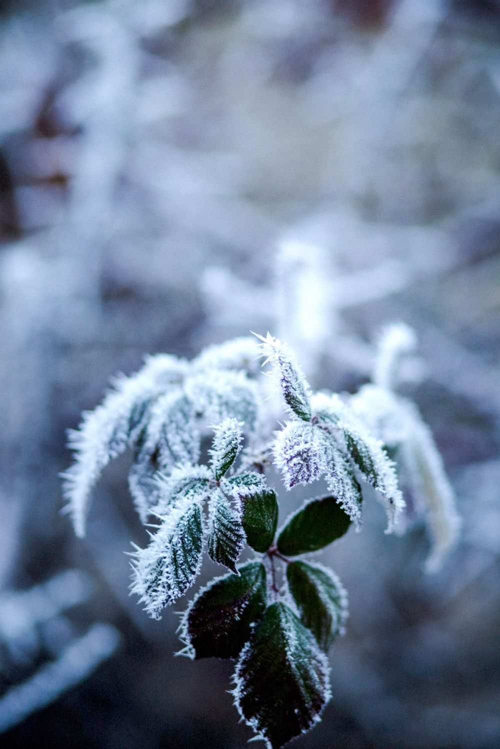 plant leves froze during winter | Container Gardening Tips For The Winter Season