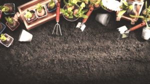 Gardening Tools and Plants on Soil Background | Gardening Zones: The Key to Understanding Agricultural Hardiness Zones | Featured