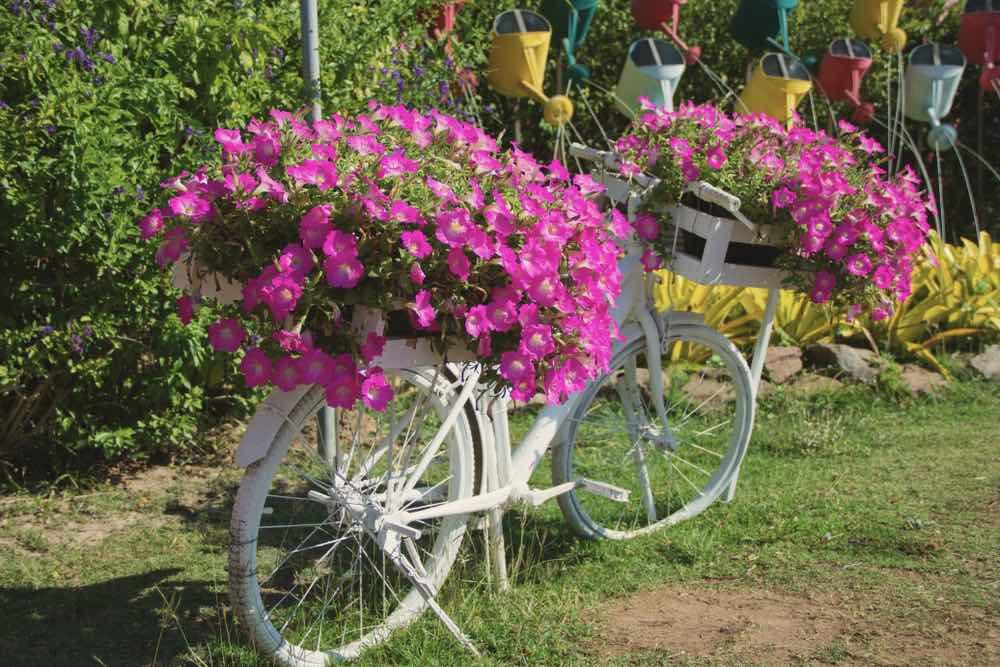 Petunias On Bike Flower Pots | Gardening For Beginners: Tips For A Beautiful Flower Garden