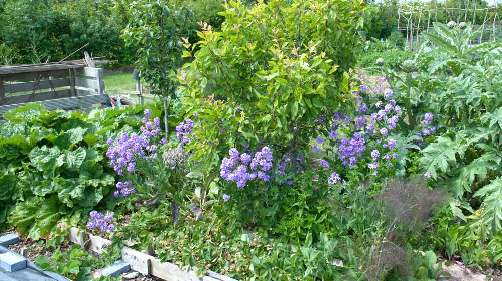 Gardening Plants | Comprehensive Companion Planting Guide For Every Gardener | Featured