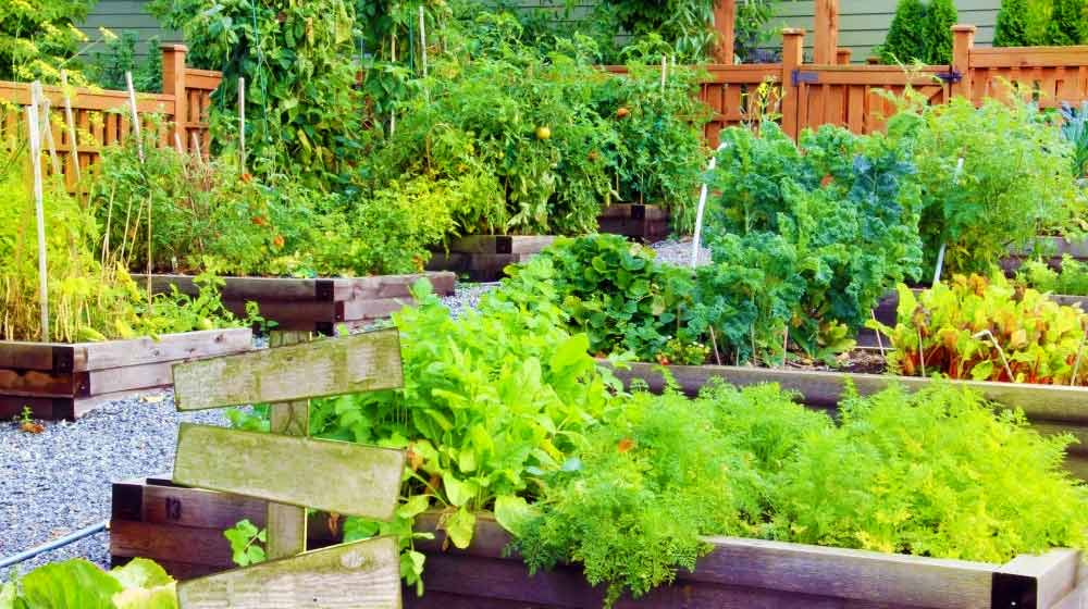 Community vegetable garden | Best Summer Vegetables And Fruits You Should Start Planting Now | summer garden | featured