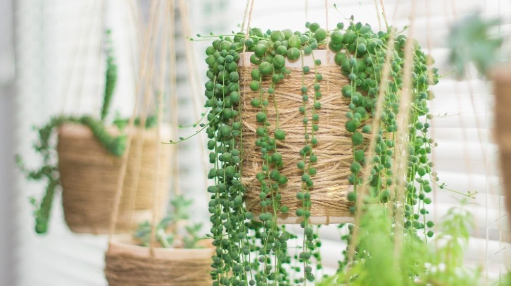 hanging garden succulent plants similar twine pots | 17 Hanging Succulents To Add Greenery To Your Home | Featured