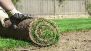 sod new lawn soil | How To Choose The Best Type Of Lawn Soil For Your Garden | Featured