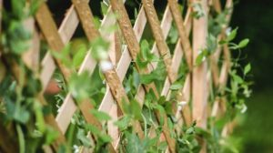 sugar snap peas growing trellis organic | Easy DIY Garden Trellis Projects | Featured
