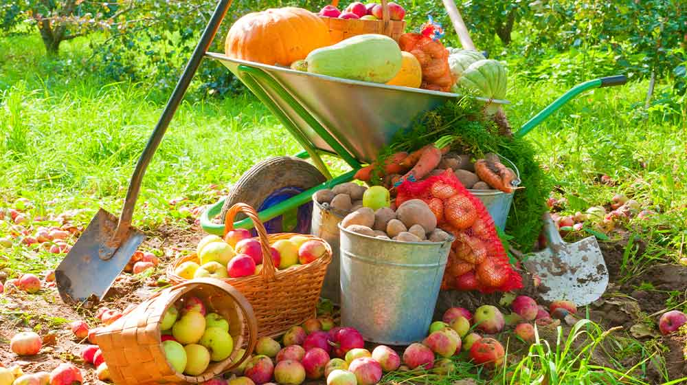 Harvested into a pile crop of vegetables in the garden | Fall Garden Crops | 21 Fruits And Veggies Perfect To Grow This Season | ss | featured
