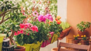 colorful flowers growing pots on balcony | 13 Pretty Fall Flowers To Plant In Your Autumn Garden Right Now | Featured