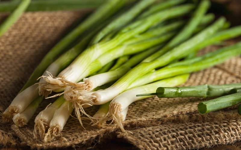 organic healthy green onion | fall fruits and vegetables